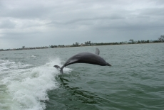 Big jump off of Sanibel