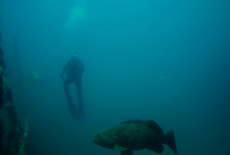 Diver with Goliath